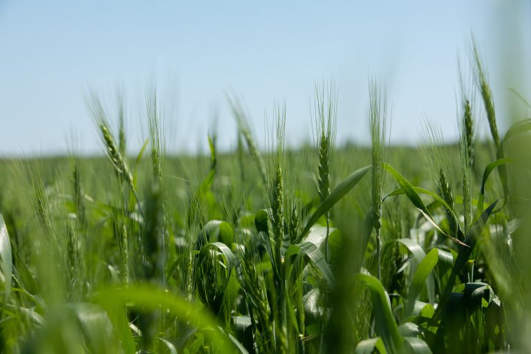 ViviGro Organic Farming -6
