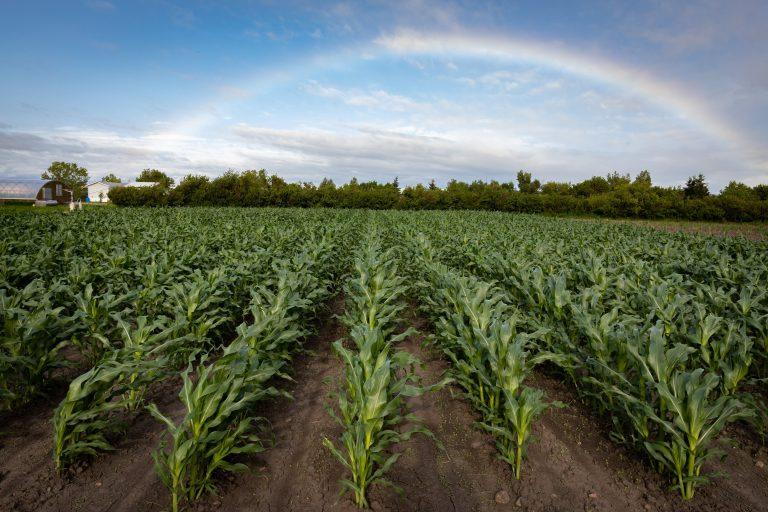ViviGro Organic Farming