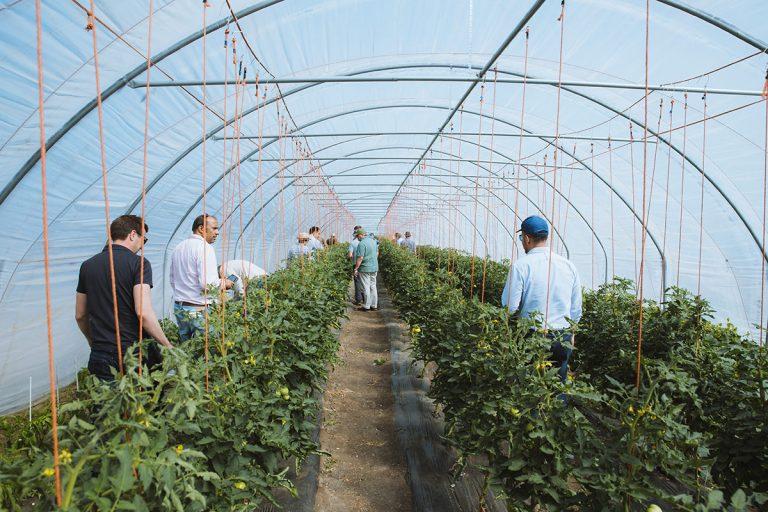 ViviGro - organic greenhouse
